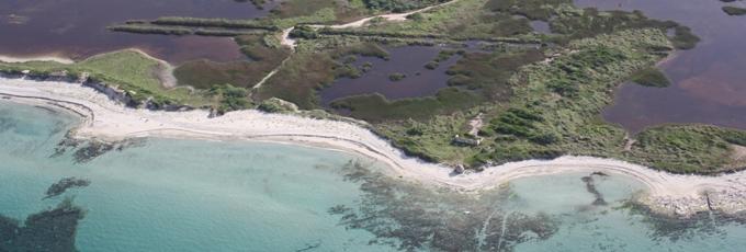 La spiaggia de Le Cesine: approdi, nidificazioni e partenze